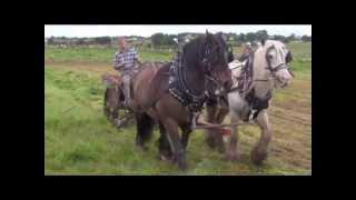 Horse drawn  mowing machine cutting grass co galway ireland 2012