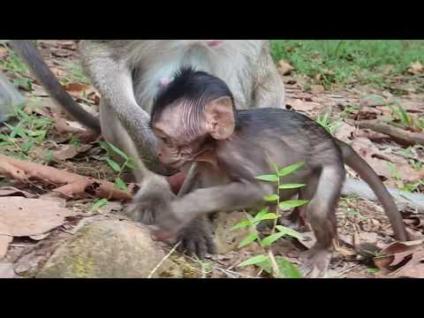 Wow Flit! Why Fauna angry with Flit? Adorable baby monkey Flit!