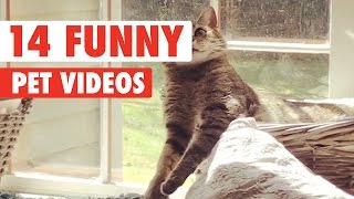 14 Funny Pets | Awesome Pet Video Compilation 2017 thumbnail