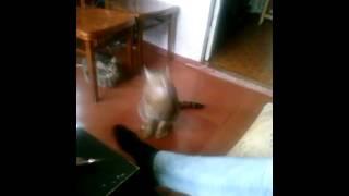 Кот удрал от крика беременной девушки