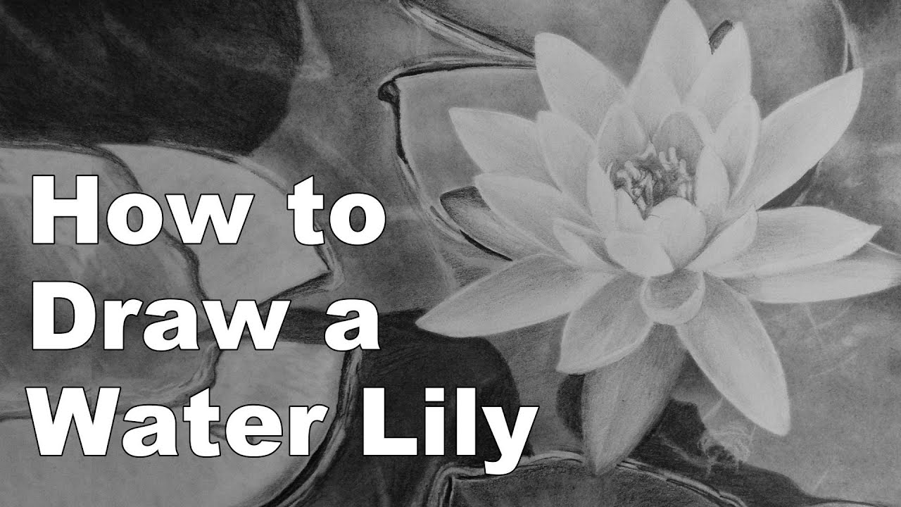 How To Draw Flowers Water Lily Time Lapse Drawing Tutorial Youtube
