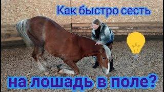 Как быстро сесть на лошадь в поле.