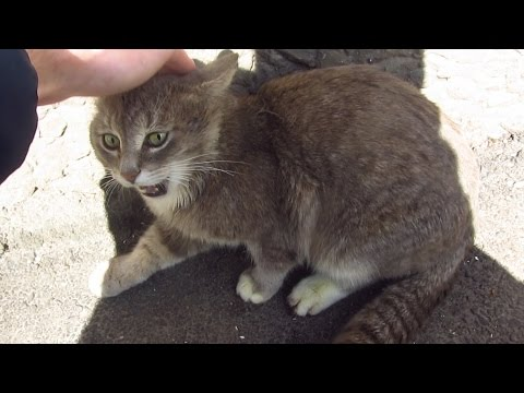 Thumbnail: The cat meows very loudly because does not want to eat food
