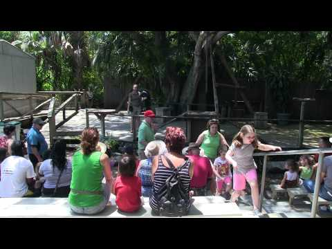 Wild Things Show at the Palm Beach Zoo & Conservation Society