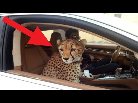 Crazy Things That Only Happen In Dubai