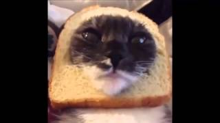 Śmieszne koty - Spróbuj się nie śmiać!!!