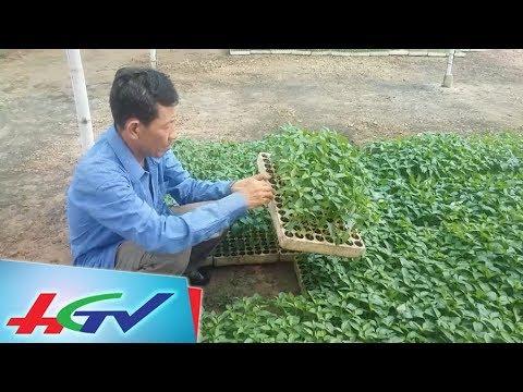 Lão nông miền Tây mê làm công nghệ cao |  BẢN TIN KINH TẾ NÔNG NGHIỆP  - 18/7/2018