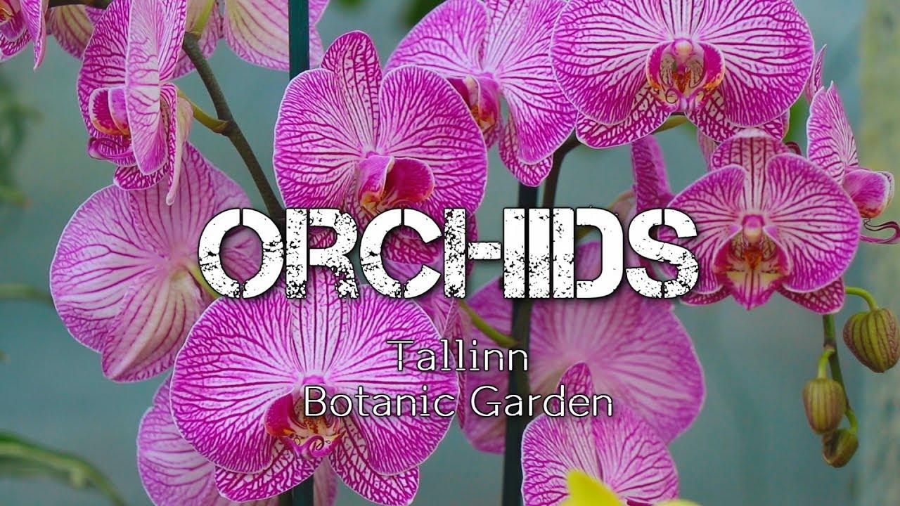 Картинки по запросу tallinn botanic garden orchid
