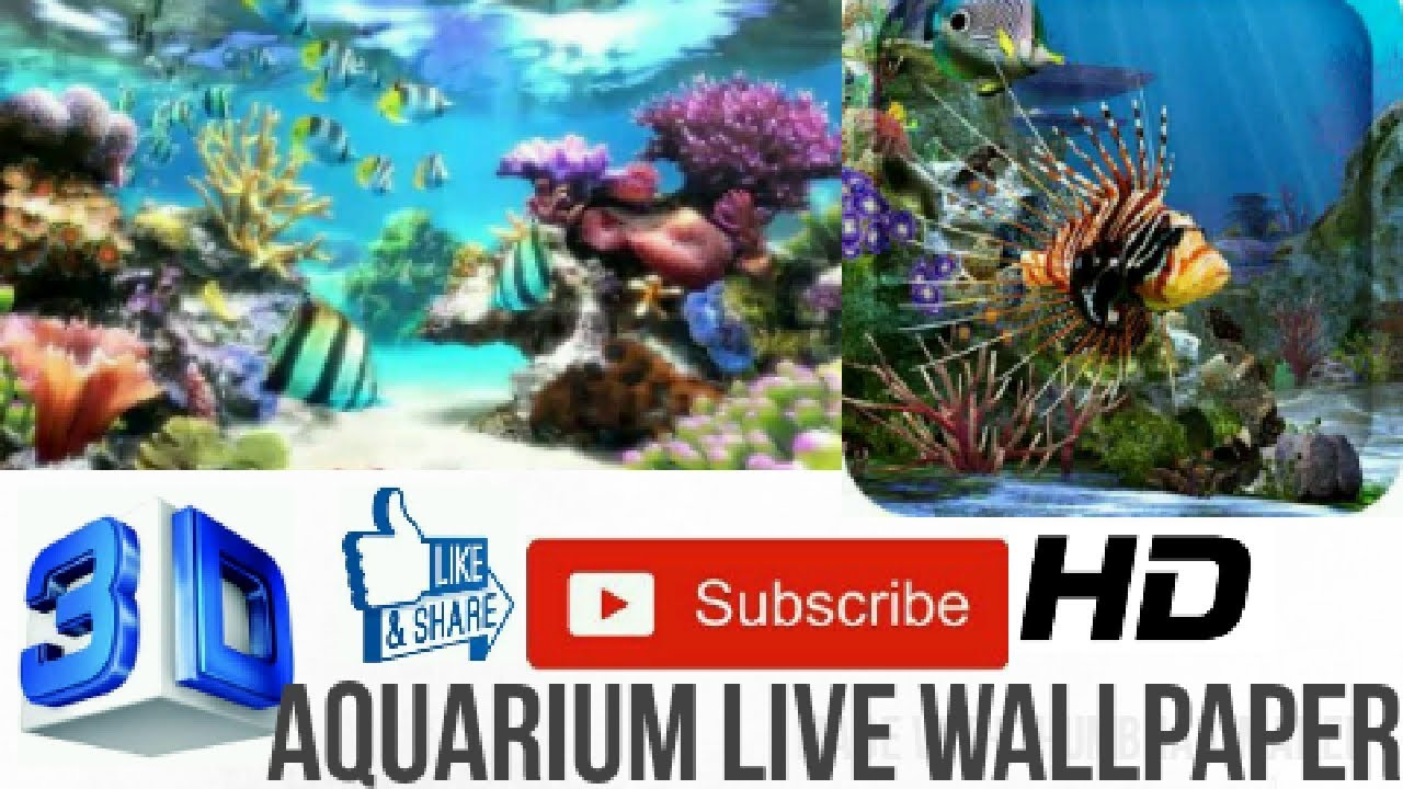 Amazing 3d Aquarium Live Wallpaper Hd Youtube