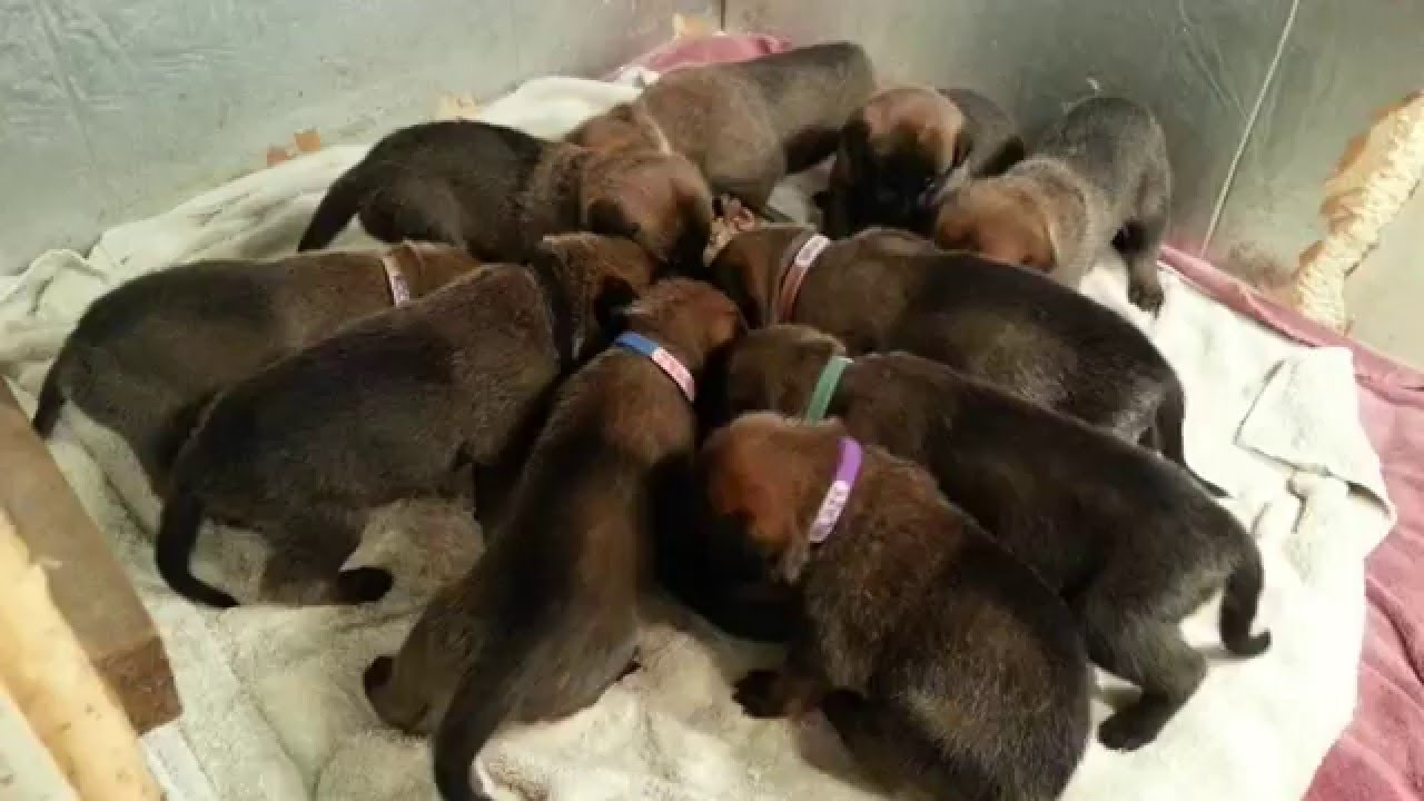 How Much Food Should A  Week Old Puppy Eat