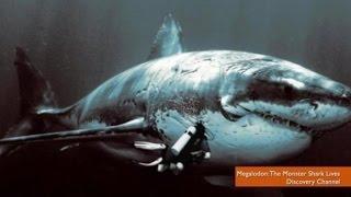 [世界Top 10]  地球上十大最巨大的生物