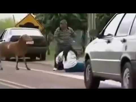 bode lutador (billy-goat  brazil) ORIGINAL