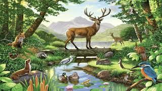"""Окружающий мир 4 класс ч.1, тема урока """"Жизнь леса"""", с.164-169, Школа России."""