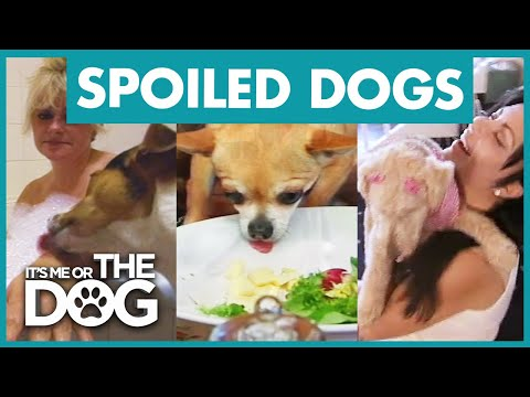 The Most Pampered Pooches   Best of It's Me or the Dog
