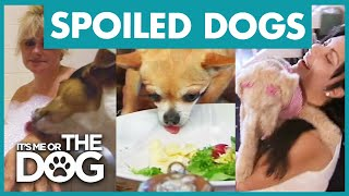 The Most Pampered Pooches | Best of It's Me or the Dog