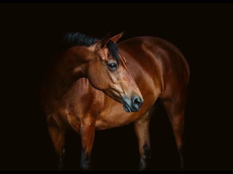 Trampoline [Equestrian Music Video]
