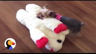 Smart Dog Goes Toy Shopping