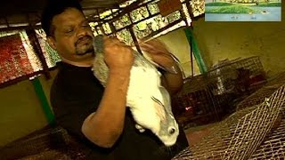 Success secrets of a rabbit farming - Manorama News Nattupacha