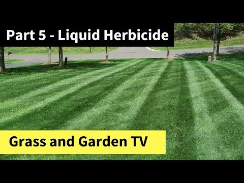 How to Improve Your Lawn by Memorial Day - Part 5 - Liquid Herbicide