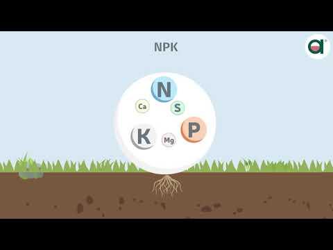NPK Fertilizers From Manufacturer