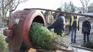 Bucks County Pa Doylestown Christmas Tree Farm