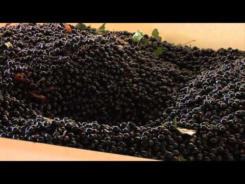 Grapes to Wine: The Process 12-06-11