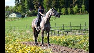 Uusi hevonen saapui Suomeen || MyDay