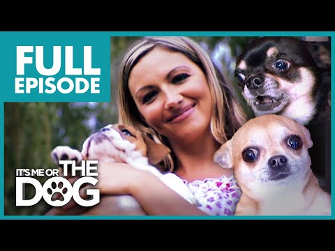 The Chihuahua Brat Pack: Jodie Marsh | Full Episode | It's Me or the Dog