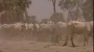 [Tchad] Elevage du Tchad