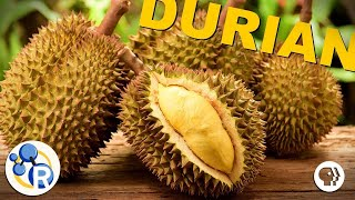 The Smell of Durian Explained (ft. BrainCraft, Joe Hanson, Physics Girl & PBS Space Time)