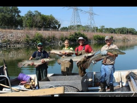 KASKASKIA RIVER STATE FISH AND WILDLIFE AREA Living Fossil Returns to Illinois Waters