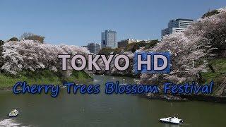 Tokyo Japan Cherry Trees Blossom Festival Chidorigafuchi Lake Asakusa Temple HD Video Stock Footage