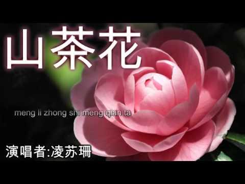 山茶花 Shan Cha Hua [by 凌苏珊]