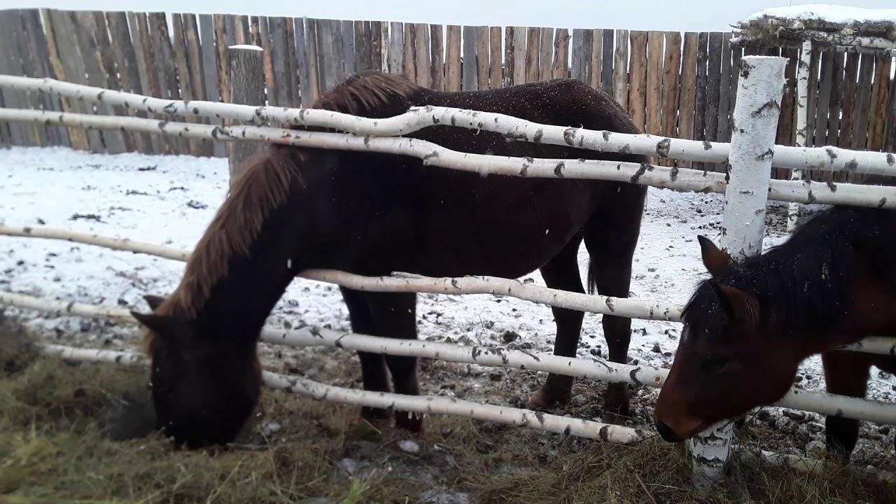 Что случилось с кобылой? Горький опыт - лошадь умерла:(((Сколько коней осталось?