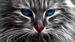 Вибриссы. Кошки с вибриссами . Есть ли кошки без вибриссов?