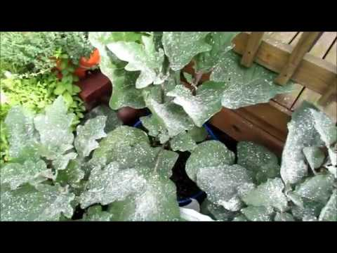 How to effectively use diatomaceous earth de in your - How to use diatomaceous earth in the garden ...
