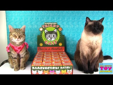 Tricky Cats Full Case Unboxing Kidrobot Toy Review   PSToyReviews