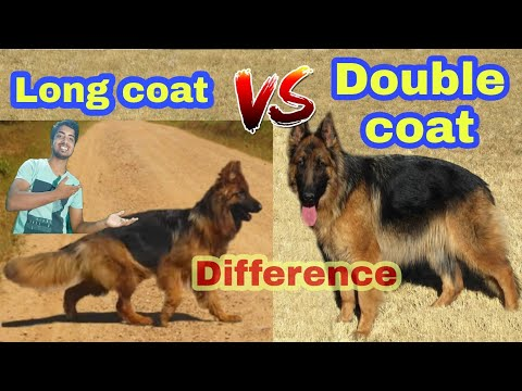 Difference between Long coat and double German shepherd