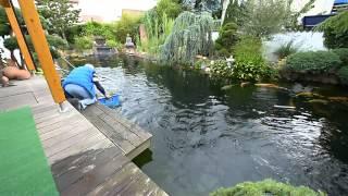 Modern Koi Blog #310 - Superjumbo Karashigoi Teich
