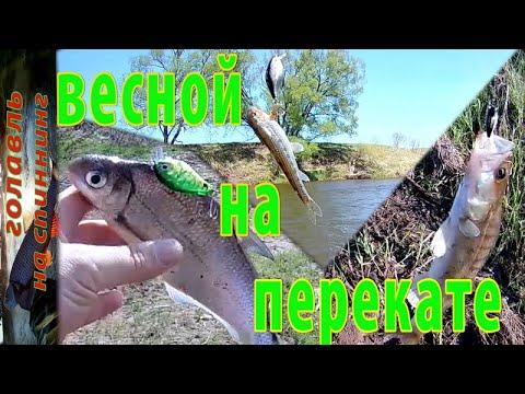 Весенняя ловля  спиннингом на перекате  реки Жиздра . Рыбалка на голавля.