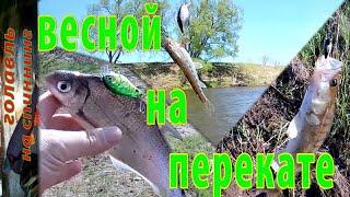 весенняя ловля  спиннингом на перекате  реки Жиздра . Рыбалка на голавля