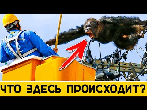 Сад участника Марина Сластенкина mar s8 Энциклопедия роз