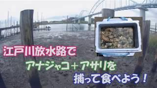 江戸川放水路は海です。ここでは至る所でアサリが採れます。アナジャコ...