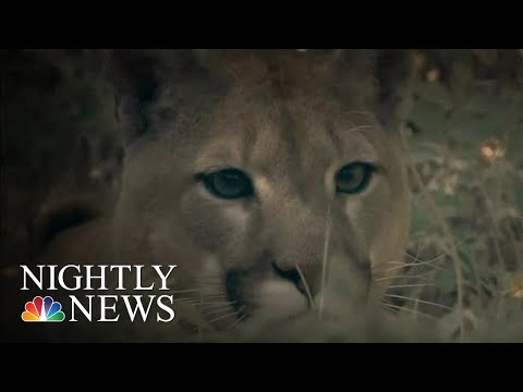 Steve Knoll - Jogger Kills Mountain Lion With His Own Hands