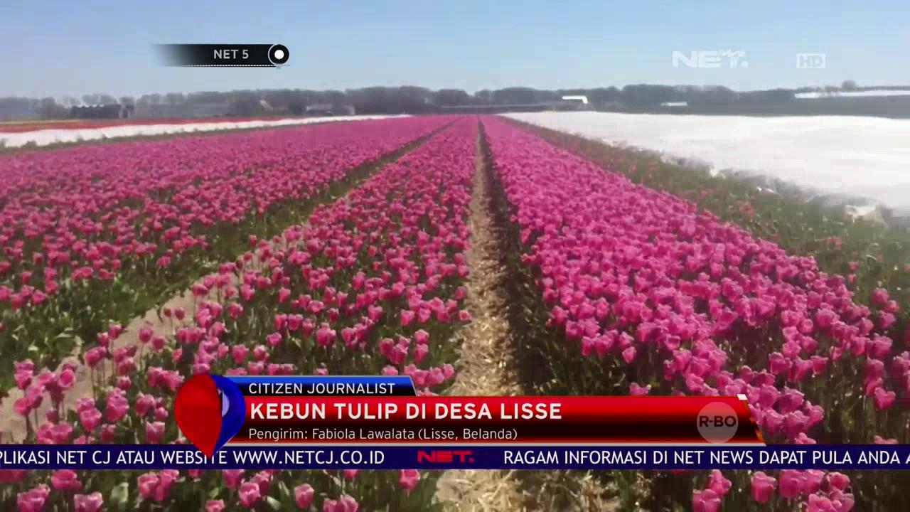 87 Gambar Taman Bunga Tulip Belanda Terlihat Keren