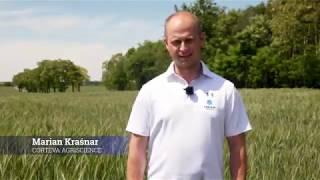 Demo Farma Wilczyniec- ocena skuteczności zabiegu herbicydem Bizon™.