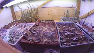 Вегетативное размножение суккулентов.