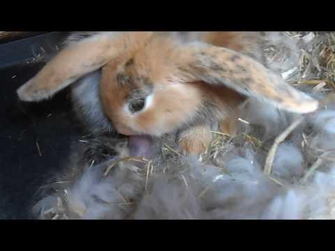 Geboorte drie konijntjes