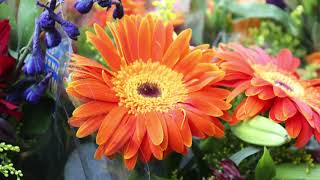 Flower farmers face landscape fraught with challenges