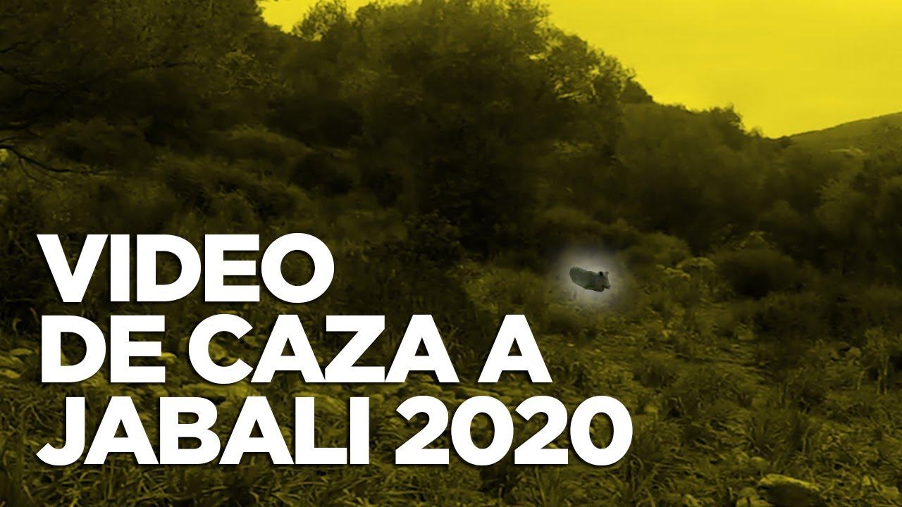 VIDEO DE CAZA DE JABALI 2020 - Lance de caza en monterías